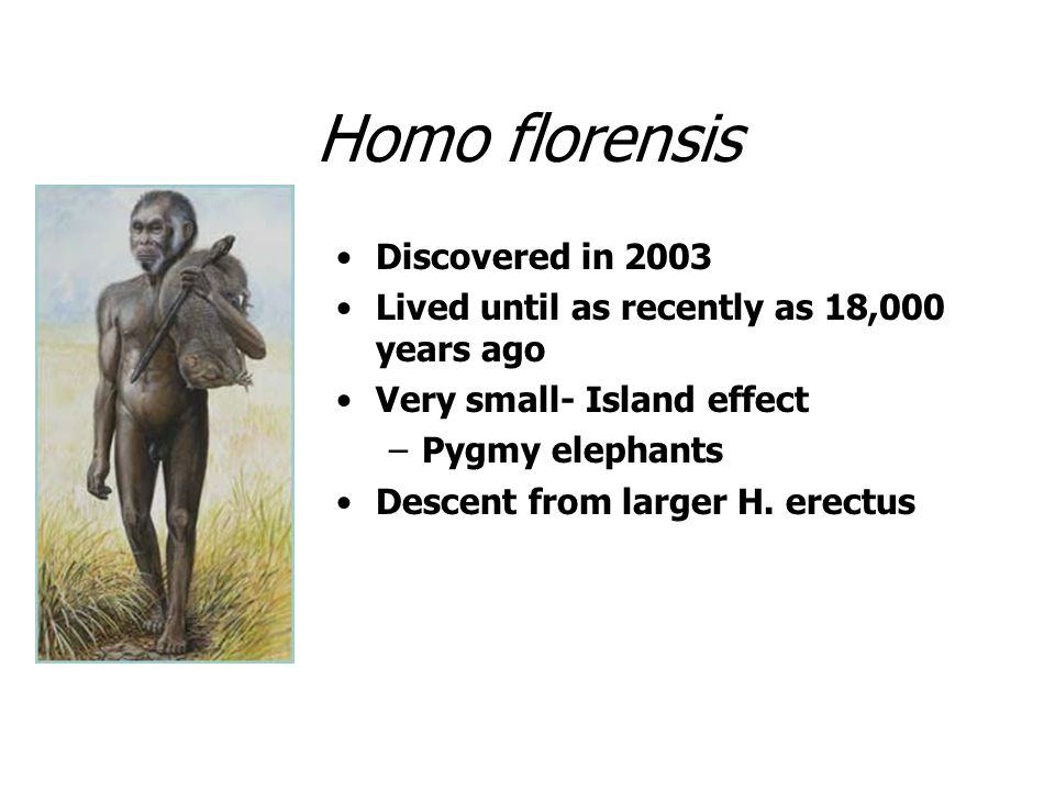 Homo florensis Discovered in 2003