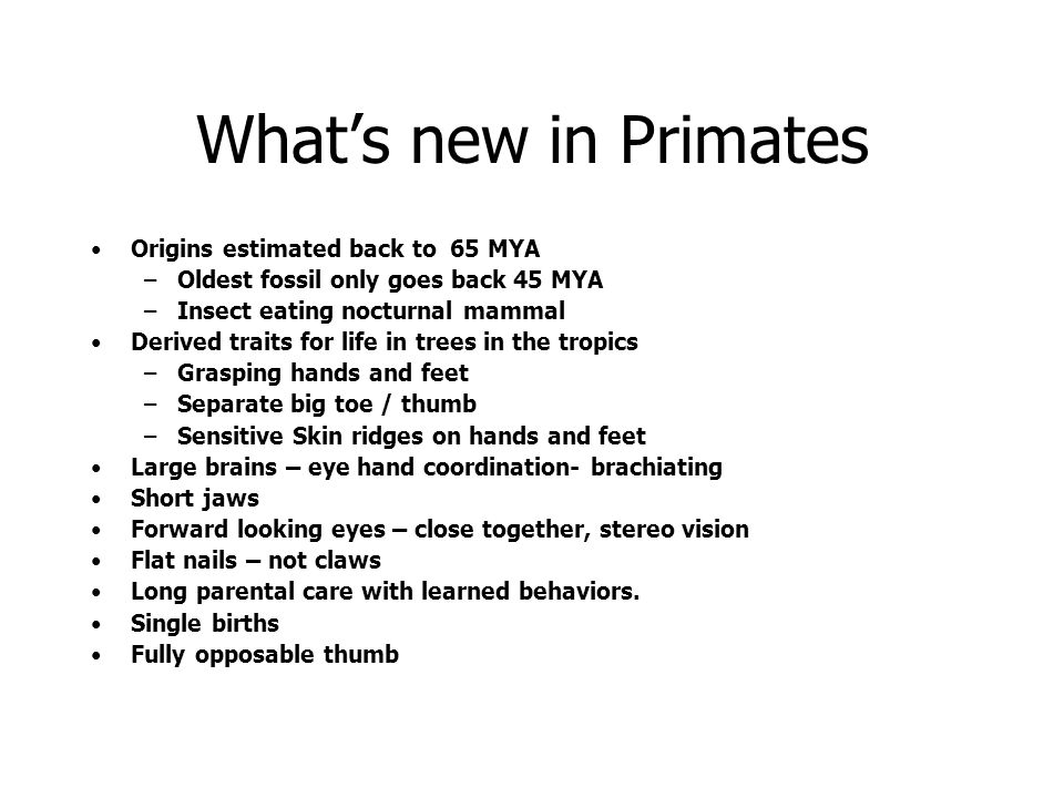 What's new in Primates Origins estimated back to 65 MYA