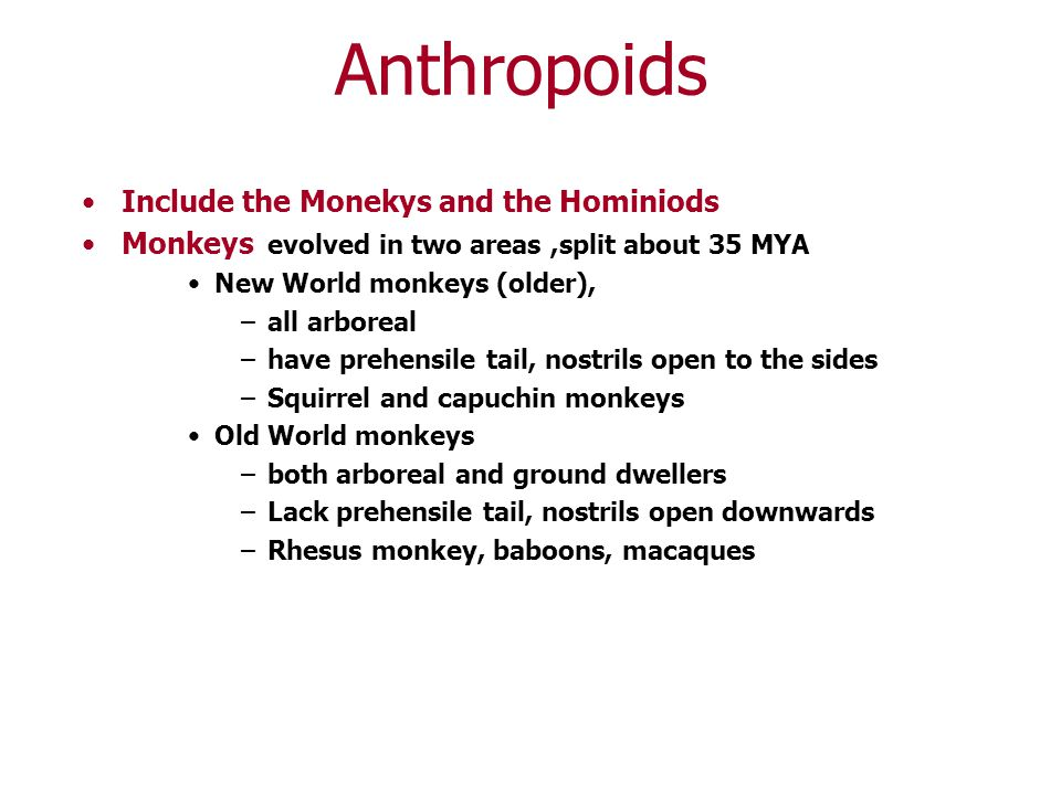 Anthropoids Include the Monekys and the Hominiods