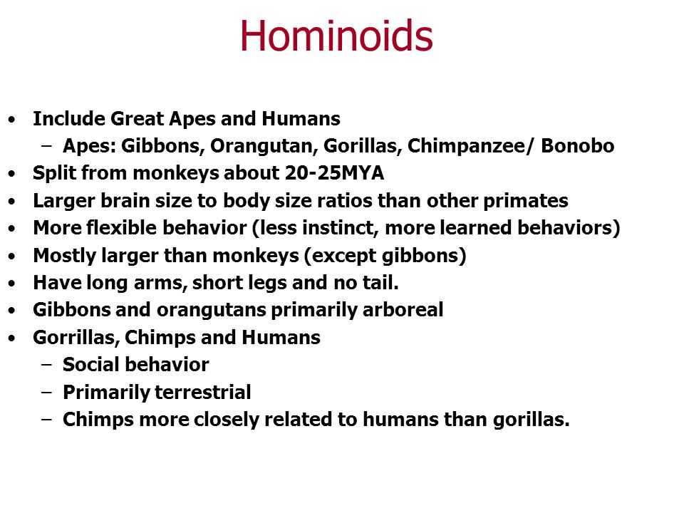 Hominoids Include Great Apes and Humans