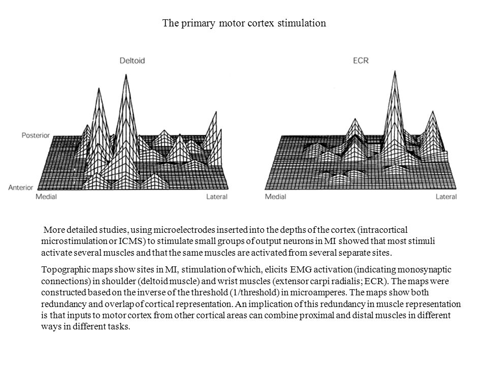 The primary motor cortex stimulation