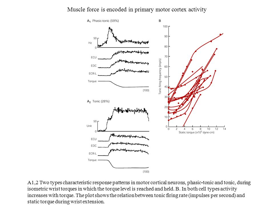 Muscle force is encoded in primary motor cortex activity