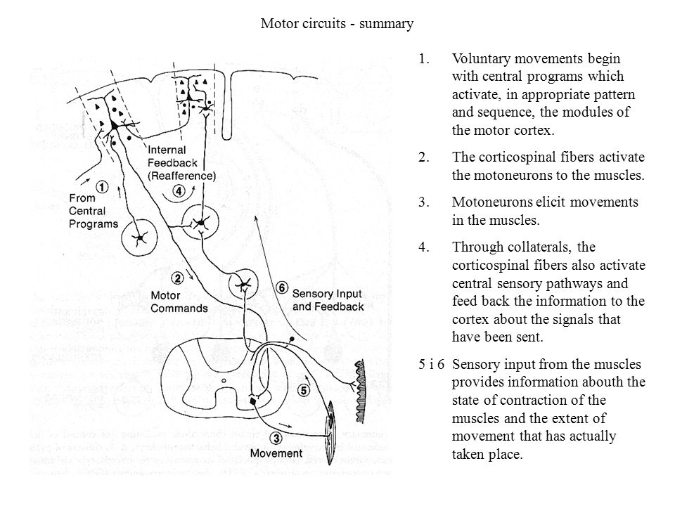 Motor circuits - summary