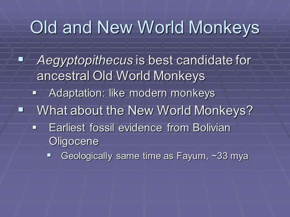 Old and New World Monkeys