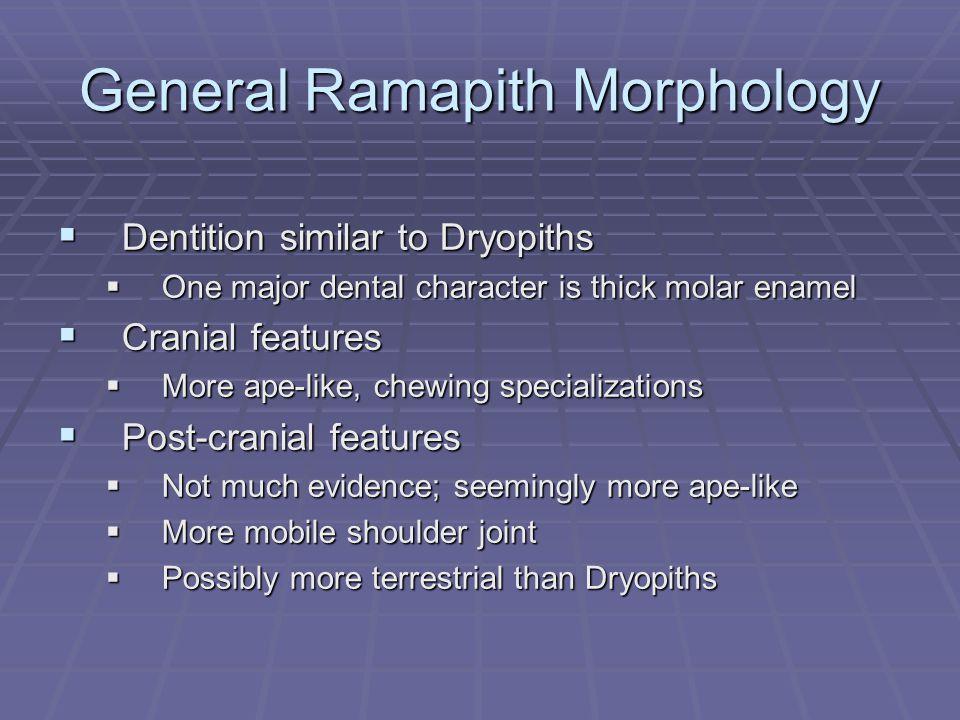 General Ramapith Morphology