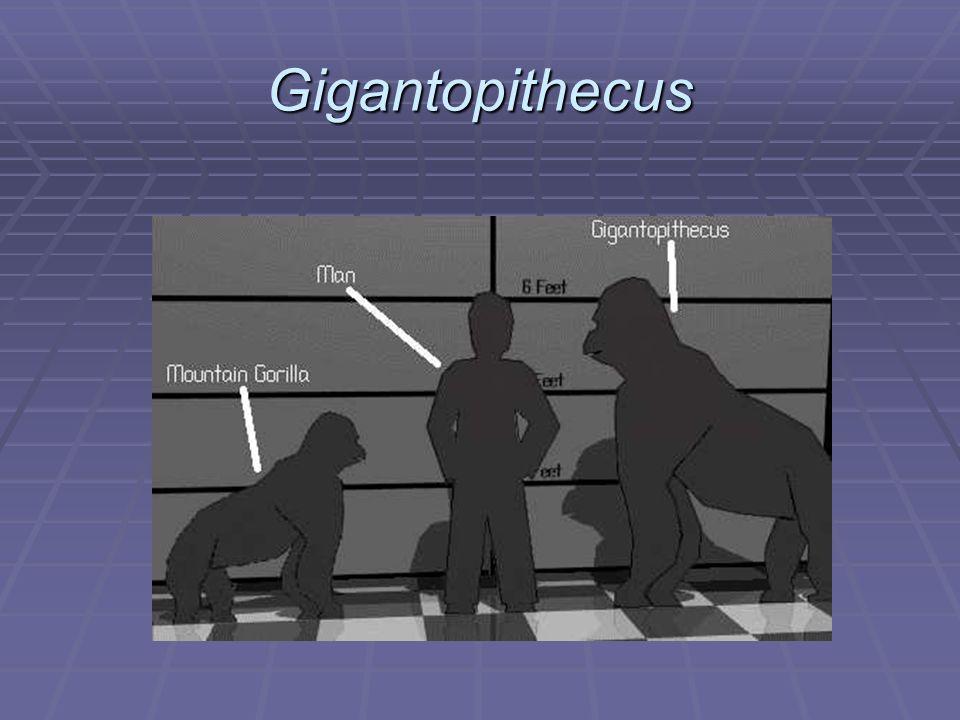 Gigantopithecus