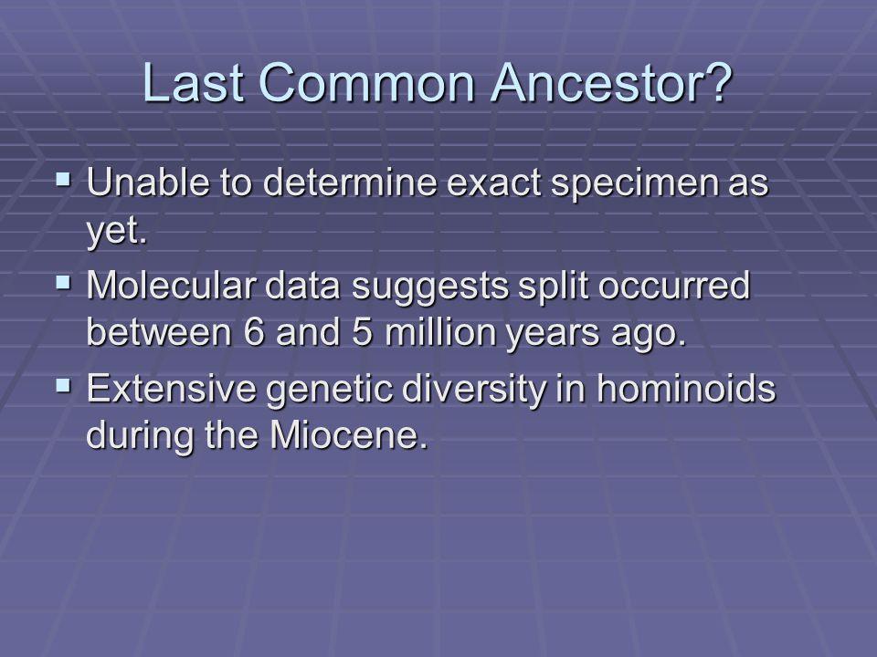 Last Common Ancestor Unable to determine exact specimen as yet.