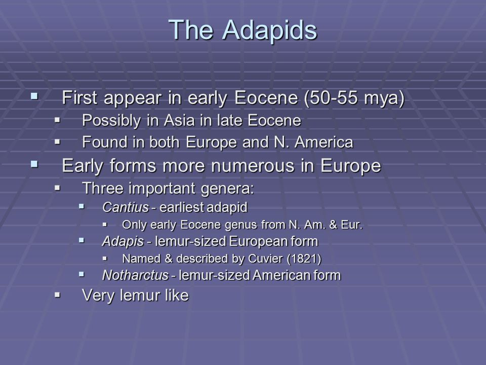 The Adapids First appear in early Eocene (50-55 mya)