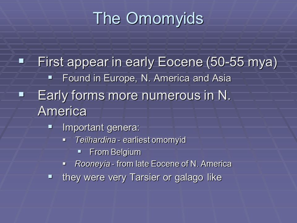 The Omomyids First appear in early Eocene (50-55 mya)