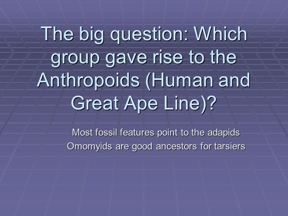 The big question: Which group gave rise to the Anthropoids (Human and Great Ape Line)