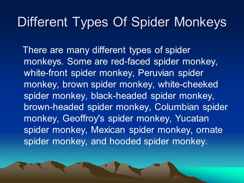 Different Types Of Spider Monkeys