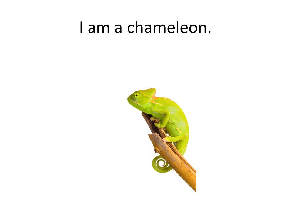 I am a chameleon.