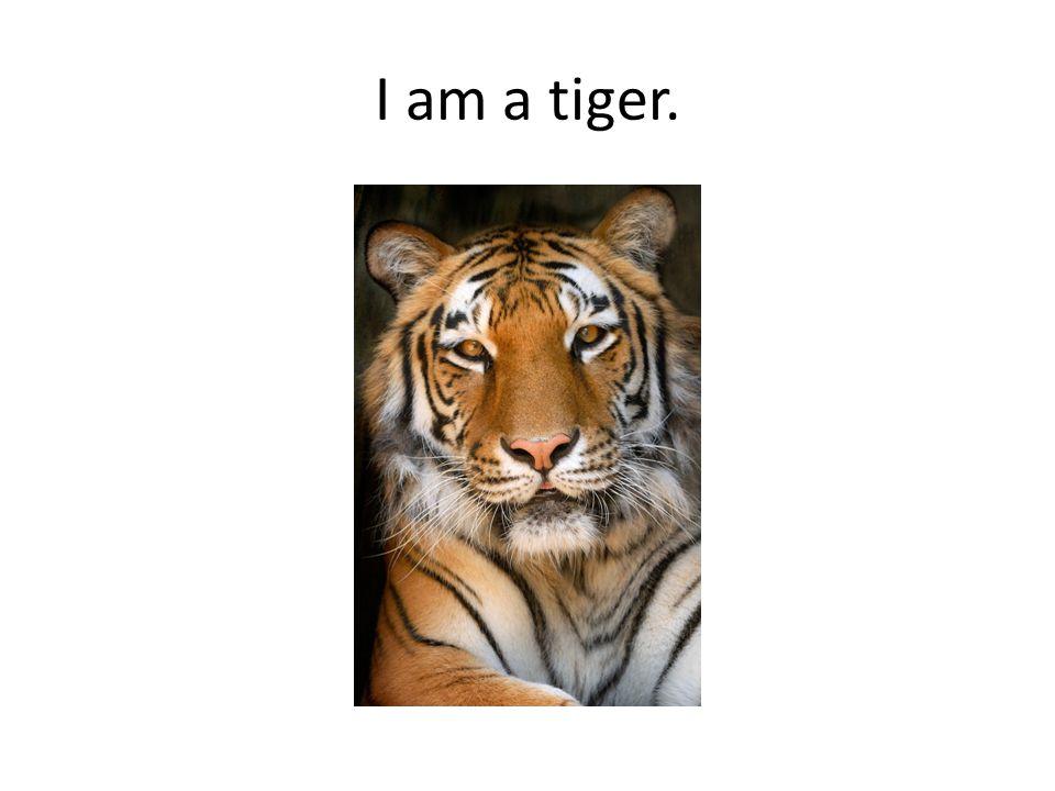 I am a tiger.