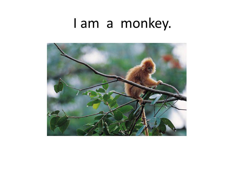 I am a monkey.