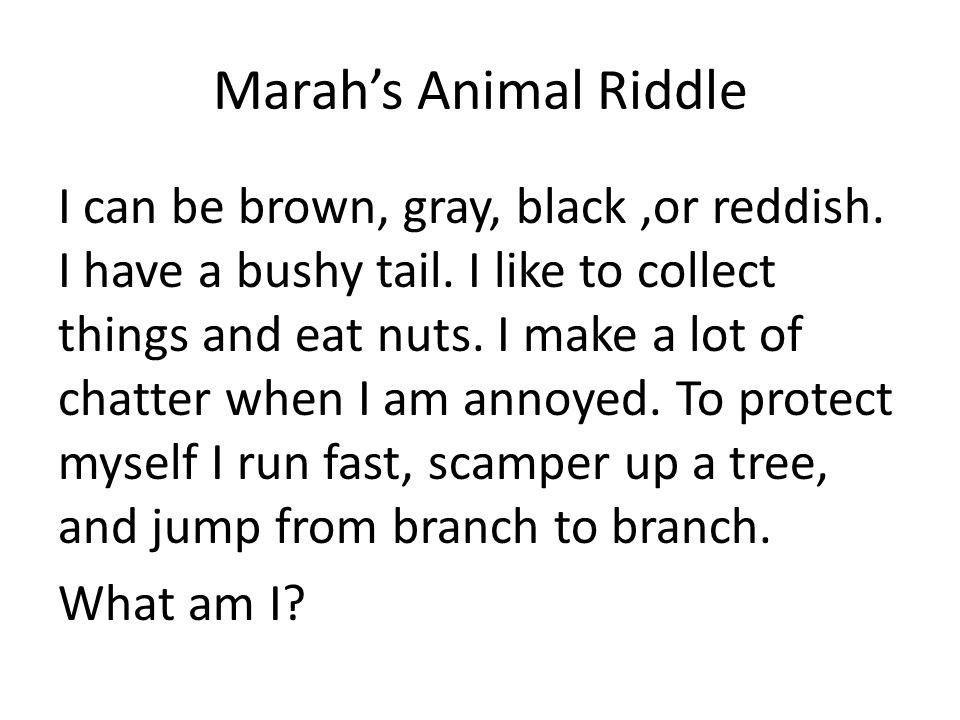 Marah's Animal Riddle