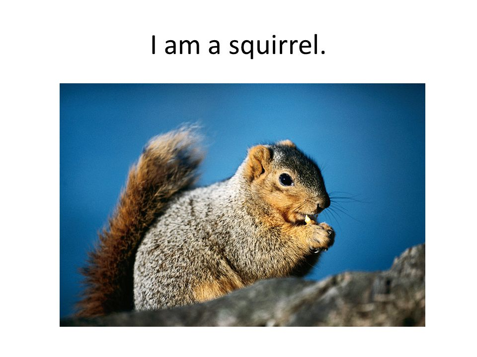 I am a squirrel.
