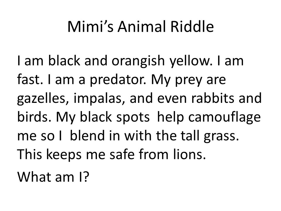 Mimi's Animal Riddle