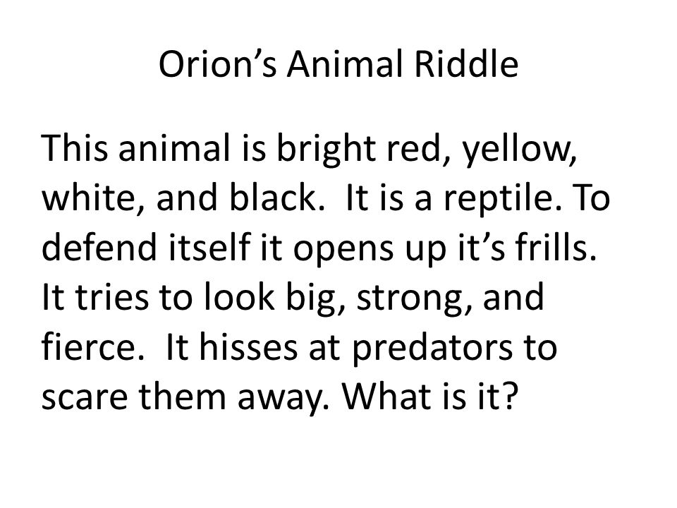Orion's Animal Riddle