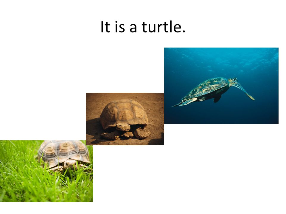 It is a turtle.