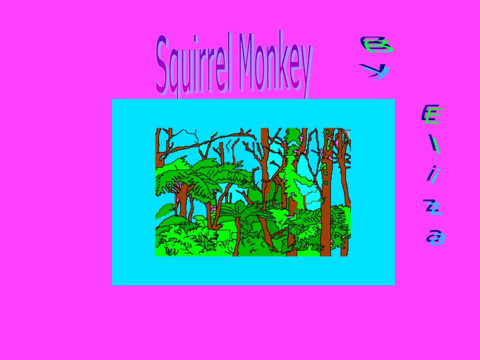 Squirrel Monkey By Eliza