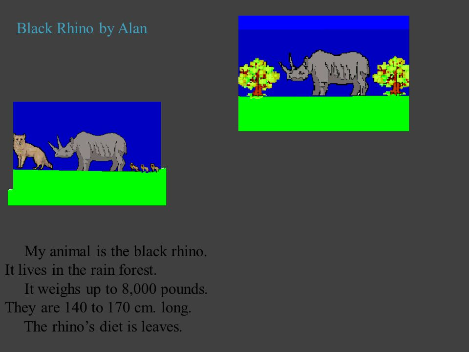Black Rhino by Alan My animal is the black rhino. It lives in the rain forest. It weighs up to 8,000 pounds. They are 140 to 170 cm. long.