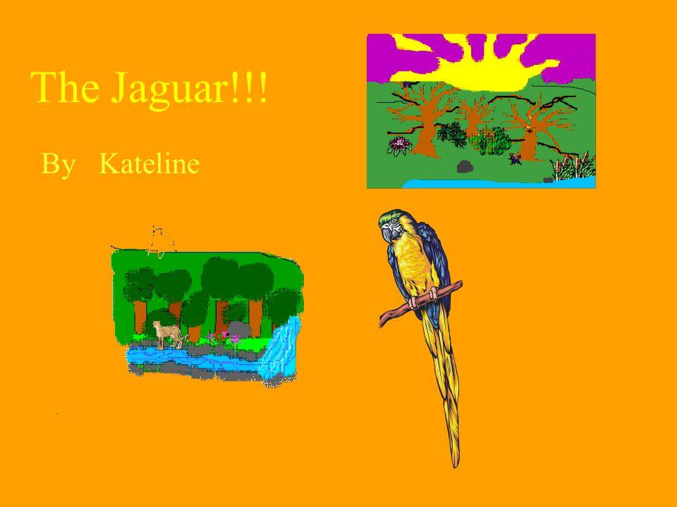 The Jaguar!!! By Kateline