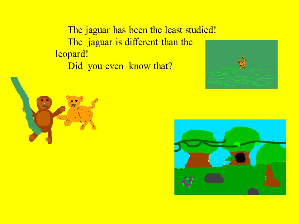 The jaguar has been the least studied. The jaguar is different than the leopard.