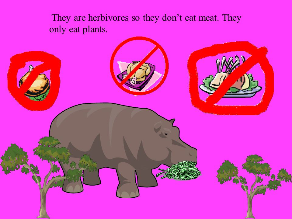 They are herbivores so they don't eat meat. They only eat plants.