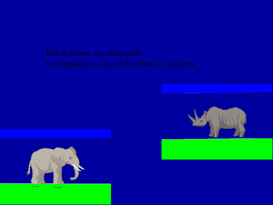 Black rhinos are mammals.