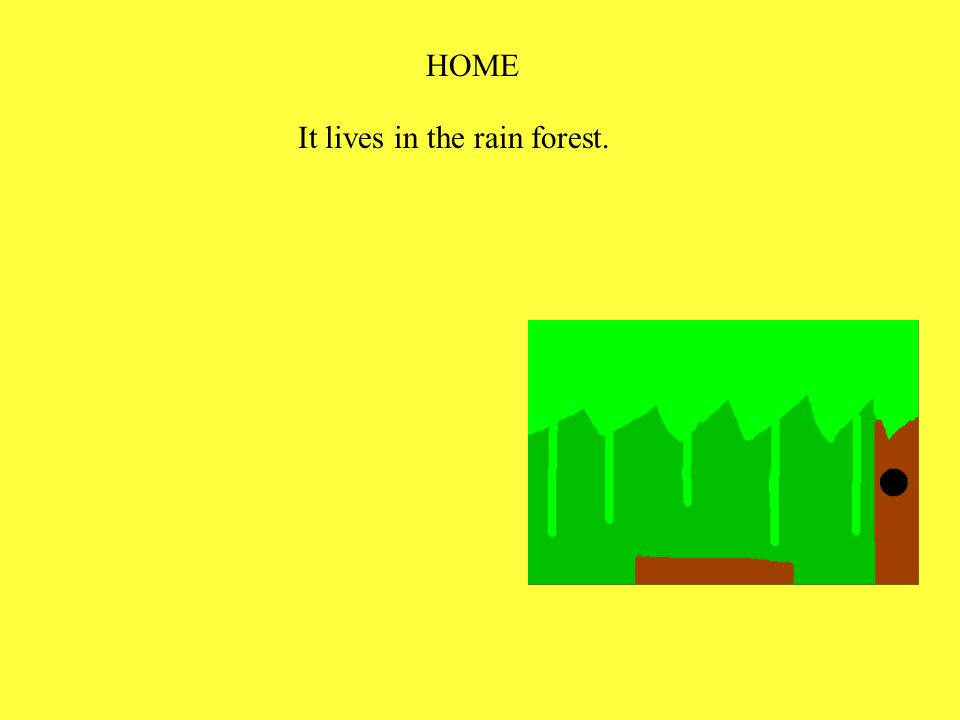 HOME It lives in the rain forest.