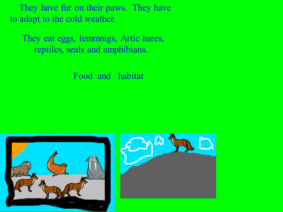 They eat eggs, lemmnigs, Artic hares, reptiles, seals and amphibians.