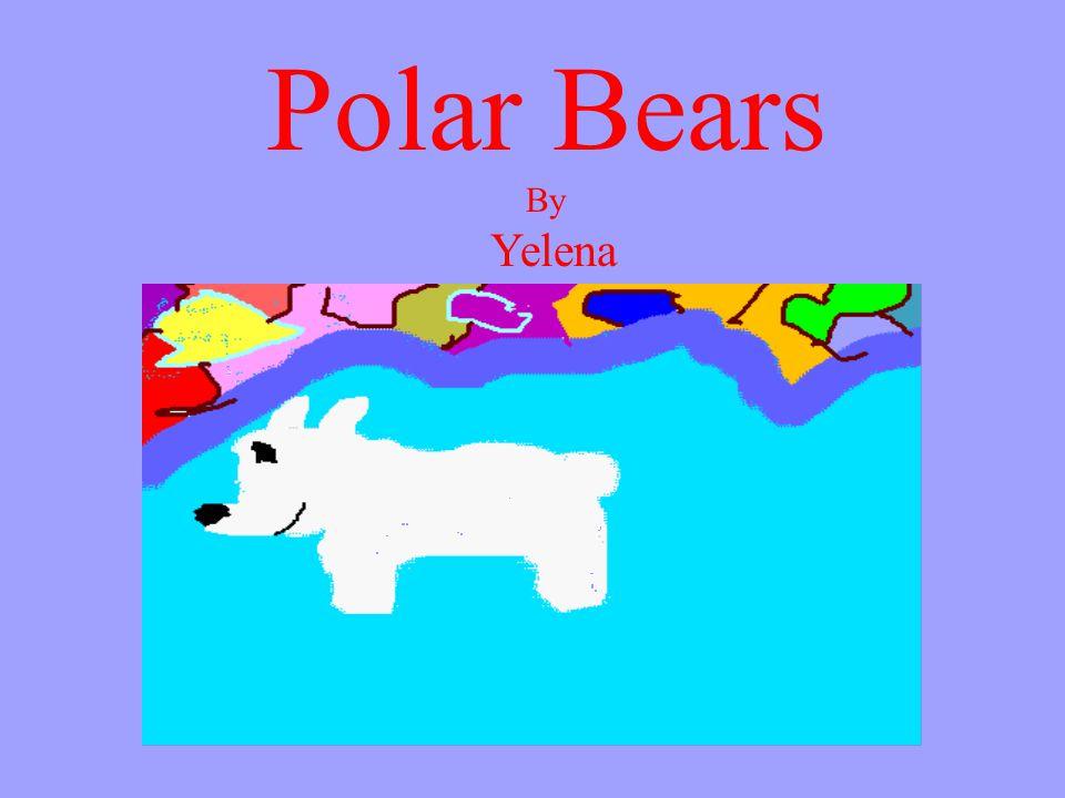 Polar Bears By Yelena