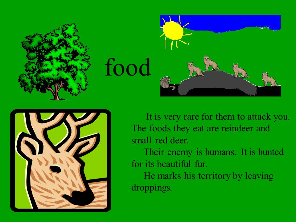 food It is very rare for them to attack you. The foods they eat are reindeer and small red deer.