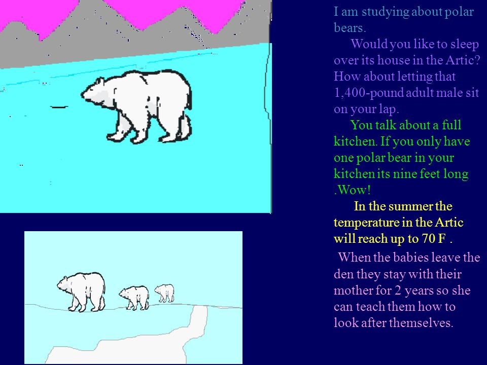 I am studying about polar bears.