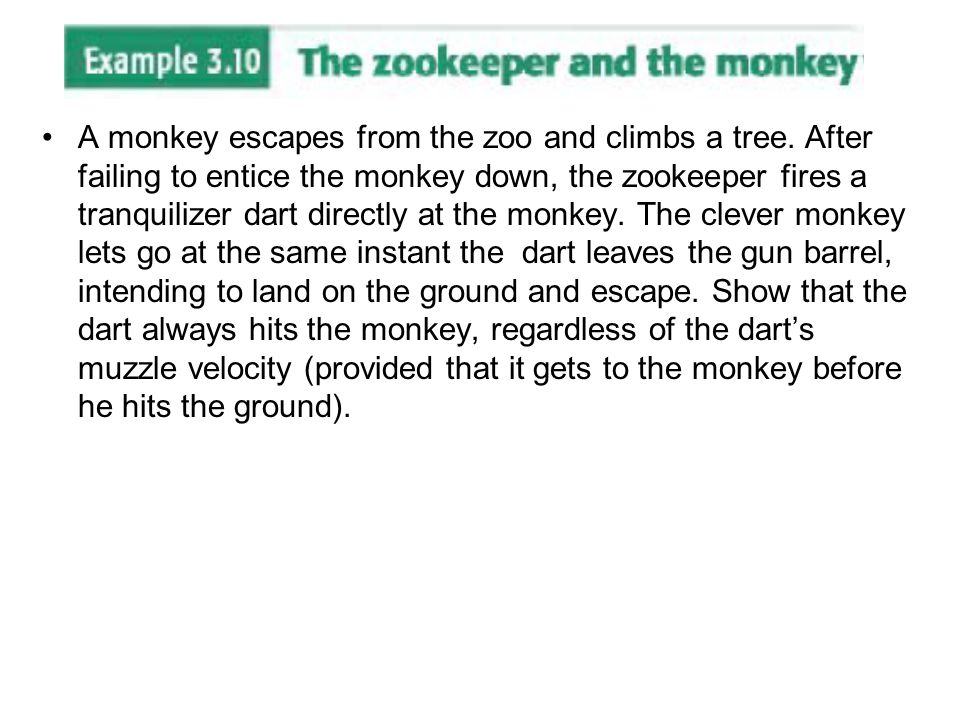 A monkey escapes from the zoo and climbs a tree