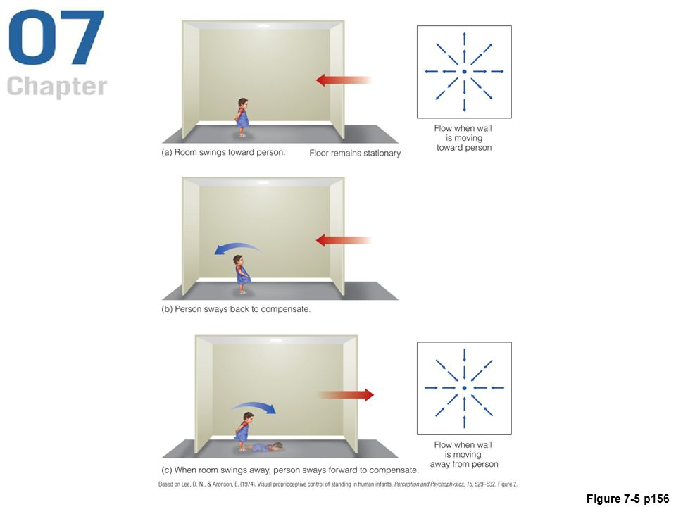 Figure 7. 5 Lee and Aronson's swinging room
