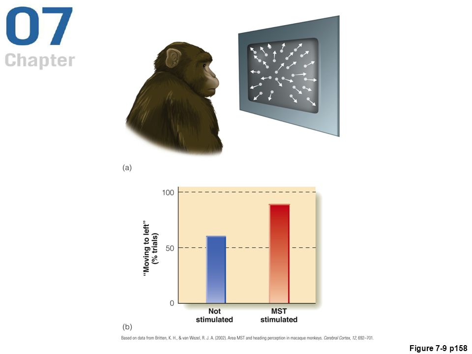 Figure 7.9 (a) A monkey watches a display of moving dots on a computer monitor. The dots indicate the flow pattern for movement slightly to the left of straight ahead. (b) Effect of microstimulation of the monkey's MST neurons that were tuned to respond to leftward movement. Stimulation (red bar) increases the monkey's judgment of leftward movement.