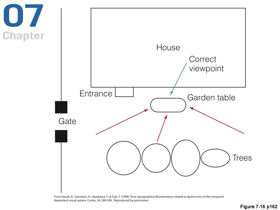 Figure 7.16 Responses of a patient with retrosplenial cortex damage when she was asked to identify the viewpoint of a photograph of her garden. The green arrow indicates the correct viewpoint of the photograph. The three red arrows are the patient's indications of the viewpoints. She was able to identify the garden table, but she could not indicate the direction from which it was seen.