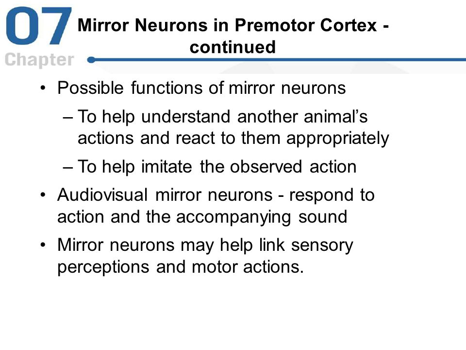 Mirror Neurons in Premotor Cortex - continued