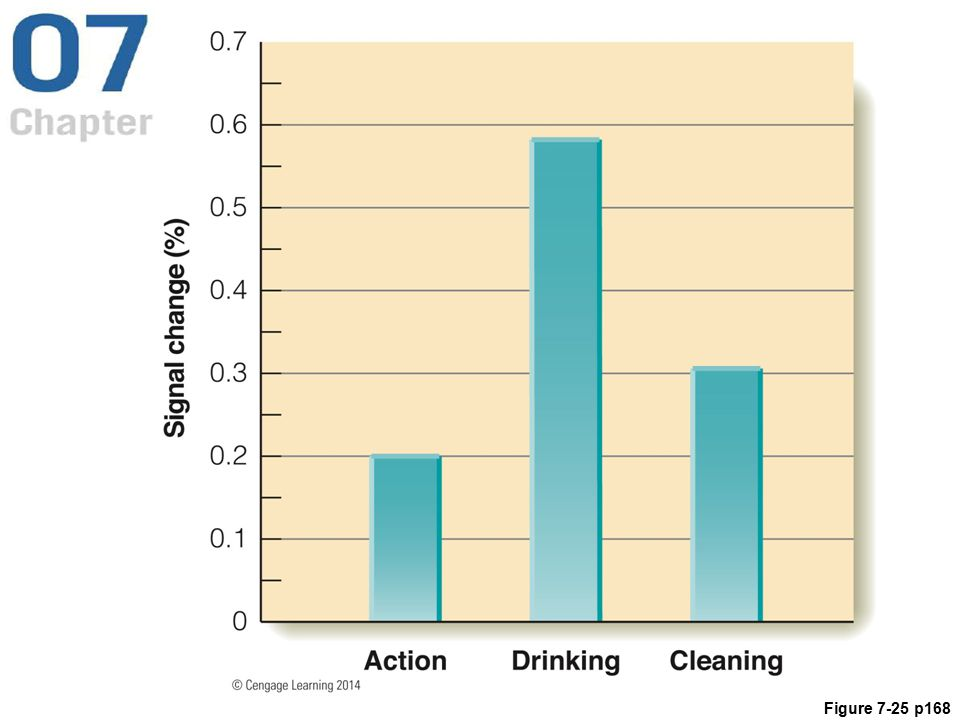 Figure 7.25 Iacoboni and coworkers' (2005) results, showing the brain response for the Action, Drinking, and Cleaning conditions.