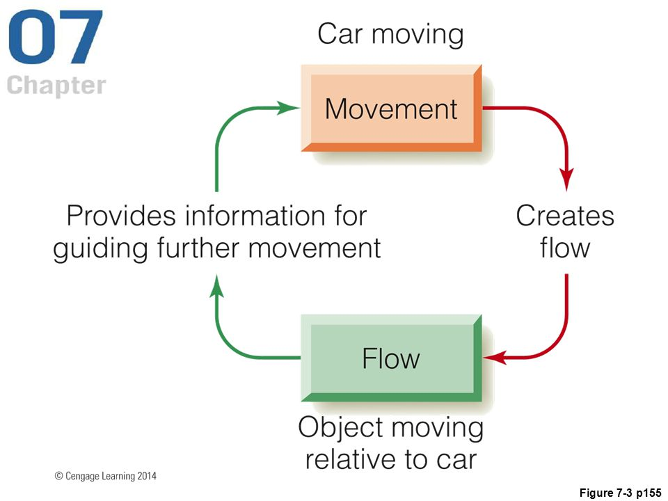 Figure 7.3 The relationship between movement and flow is reciprocal, with movement causing flow and flow guiding movement. This is the basic principle behind much of our interaction with the environment.