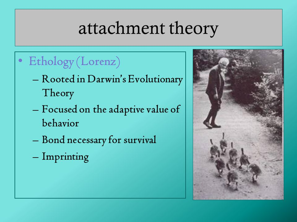 attachment theory Ethology (Lorenz)