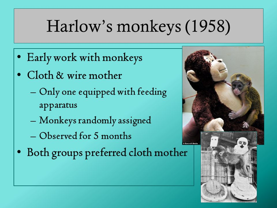 Harlow's monkeys (1958) Early work with monkeys Cloth & wire mother