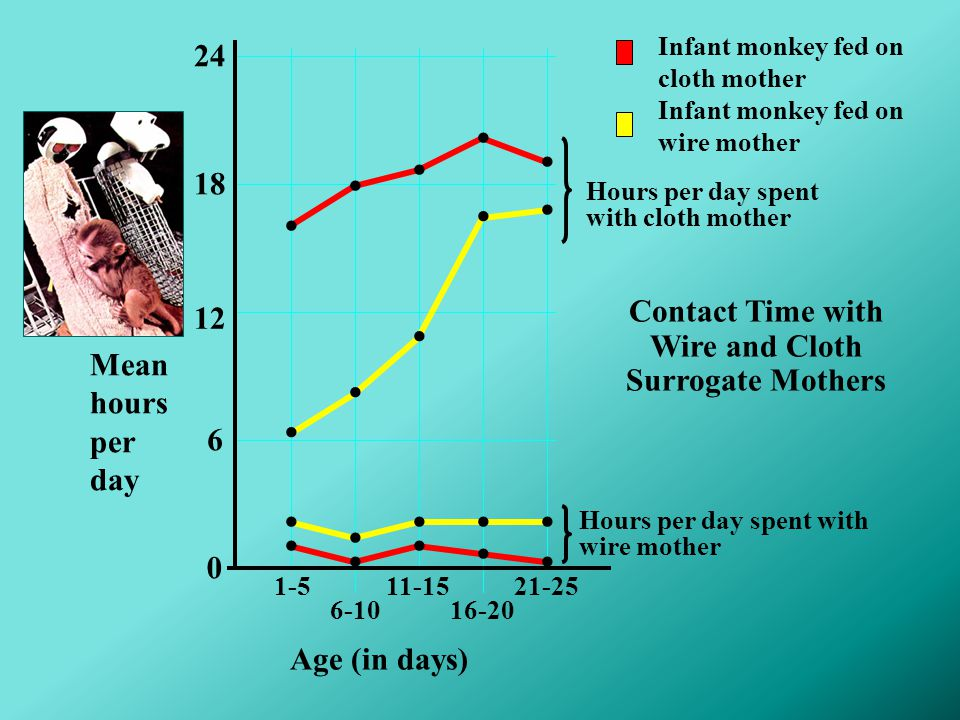 Contact Time with Wire and Cloth Surrogate Mothers