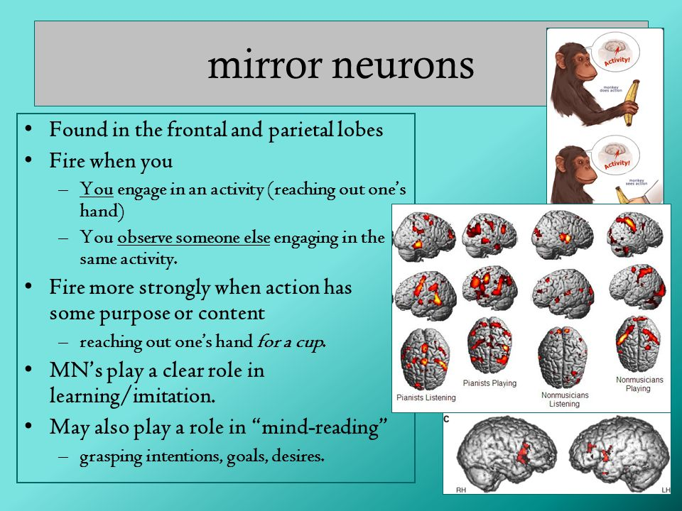 mirror neurons Found in the frontal and parietal lobes Fire when you