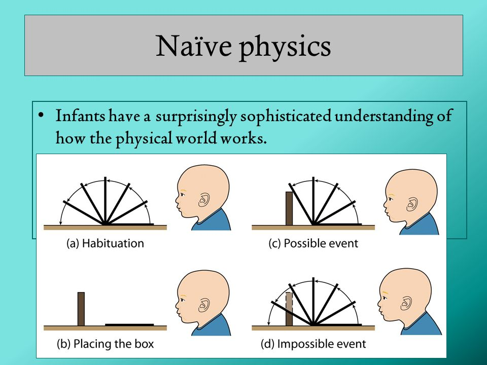 Naïve physics Infants have a surprisingly sophisticated understanding of how the physical world works.