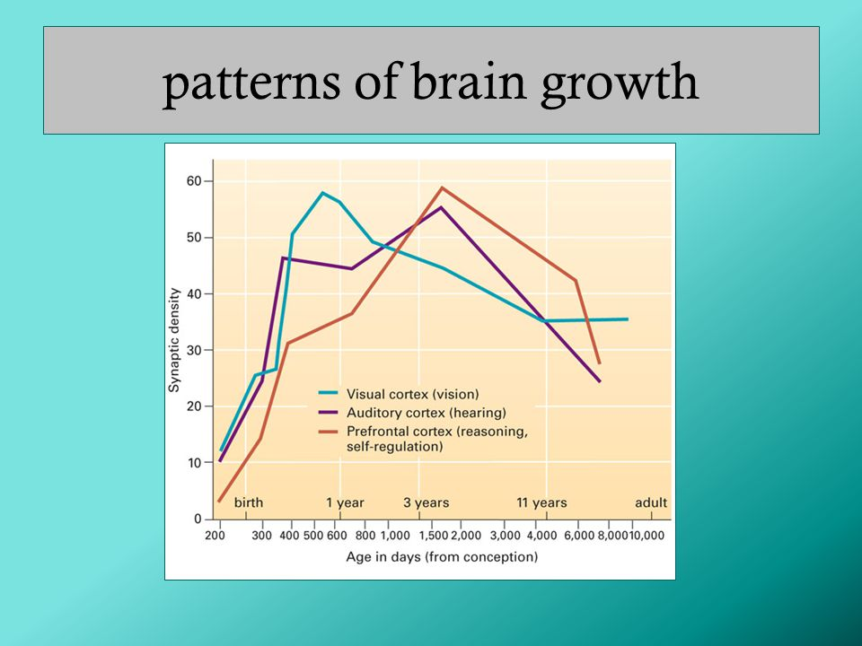 patterns of brain growth