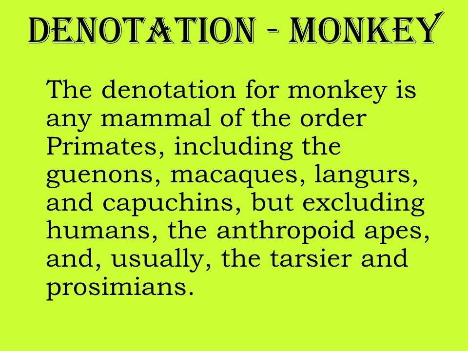 Denotation - Monkey