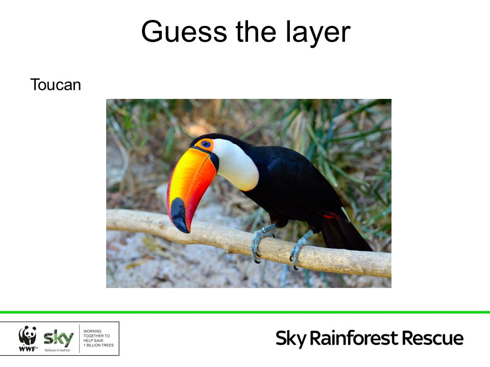 Guess the layer Toucan