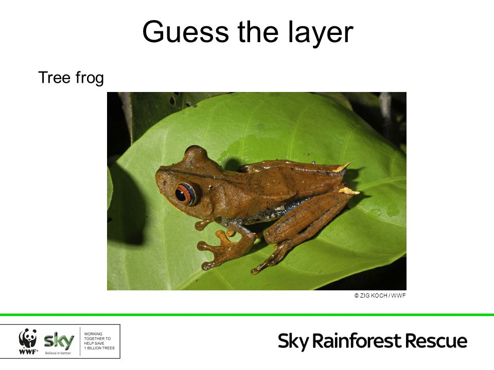 Guess the layer Tree frog © ZIG KOCH / WWF